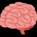脳<br>